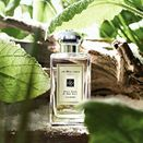 Summer Scents: Best Perfumes for the Big Day