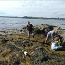 Forage and Cook Wild Cornish Seaweed